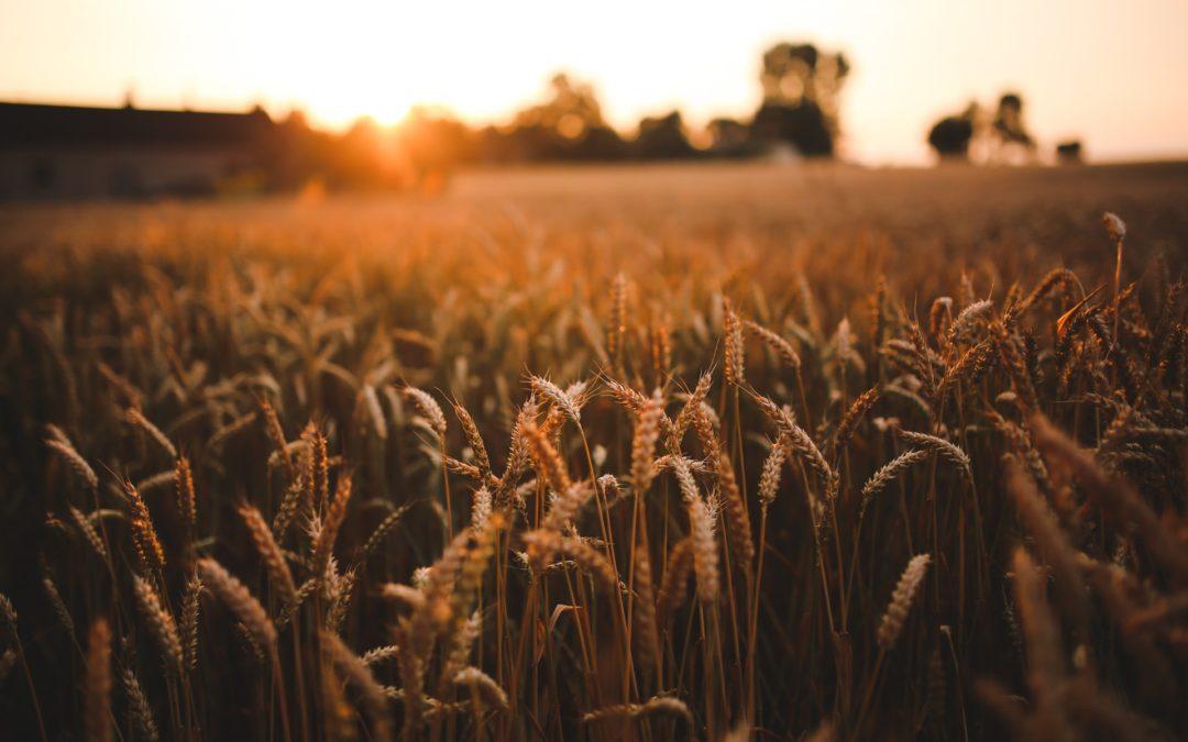 Speed breeding, la nueva revolución agrícola