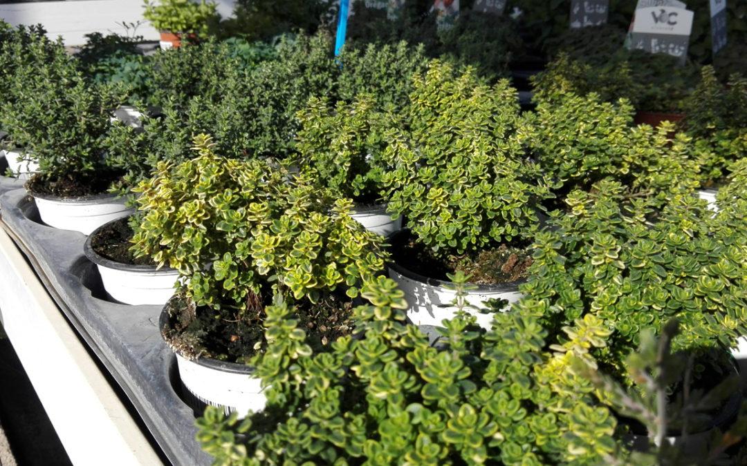 Plantas para controlar plagas ecológicas