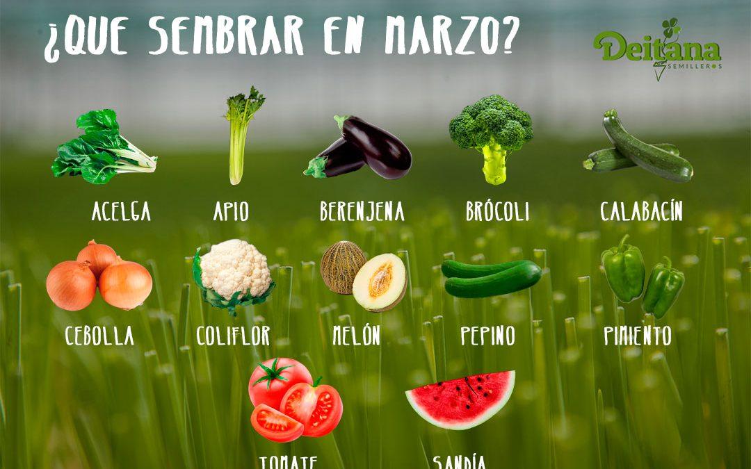 ¿Qué sembrar en marzo?