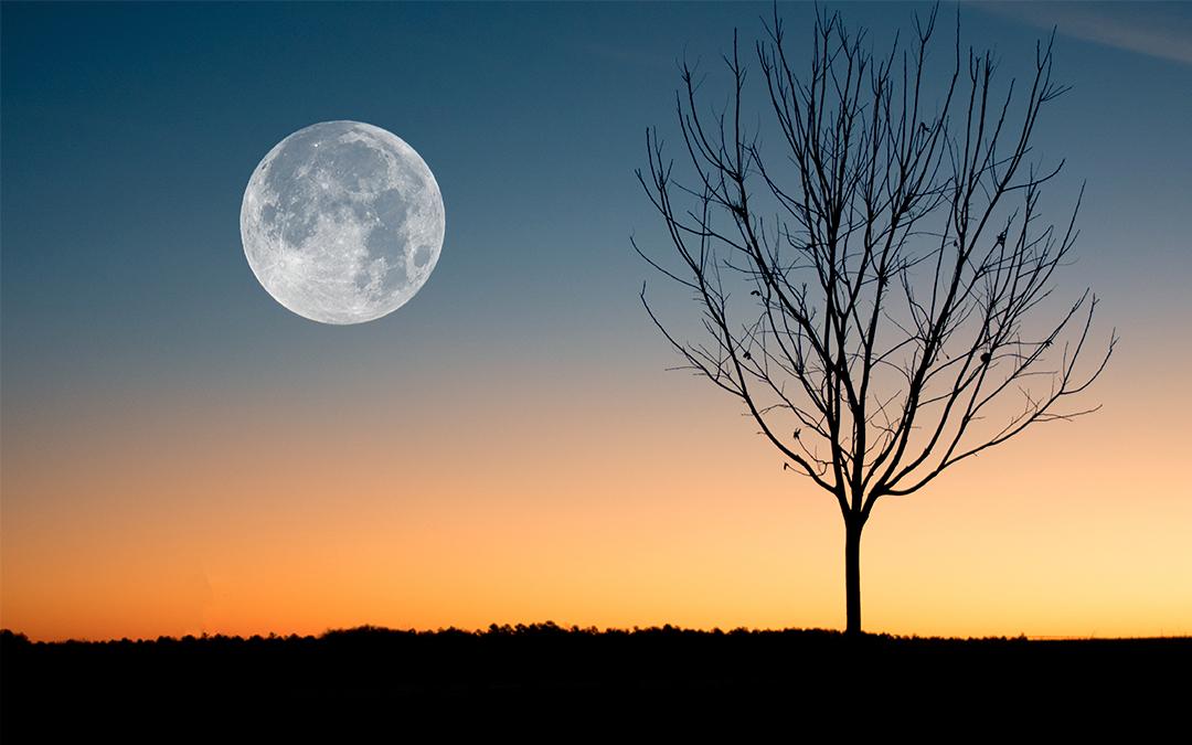 Como cultivar según las fases de la luna