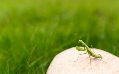 Insectos beneficiosos para la agricultura